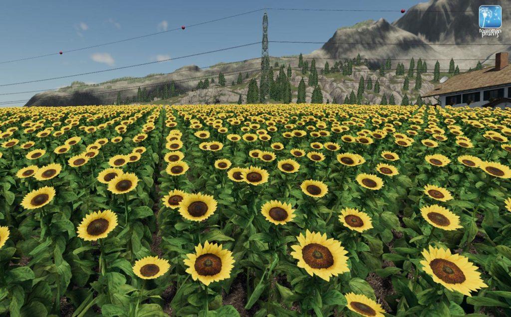 image-sunflowers